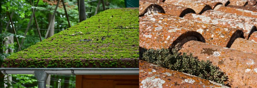 démousser-toit-mousse-lichen
